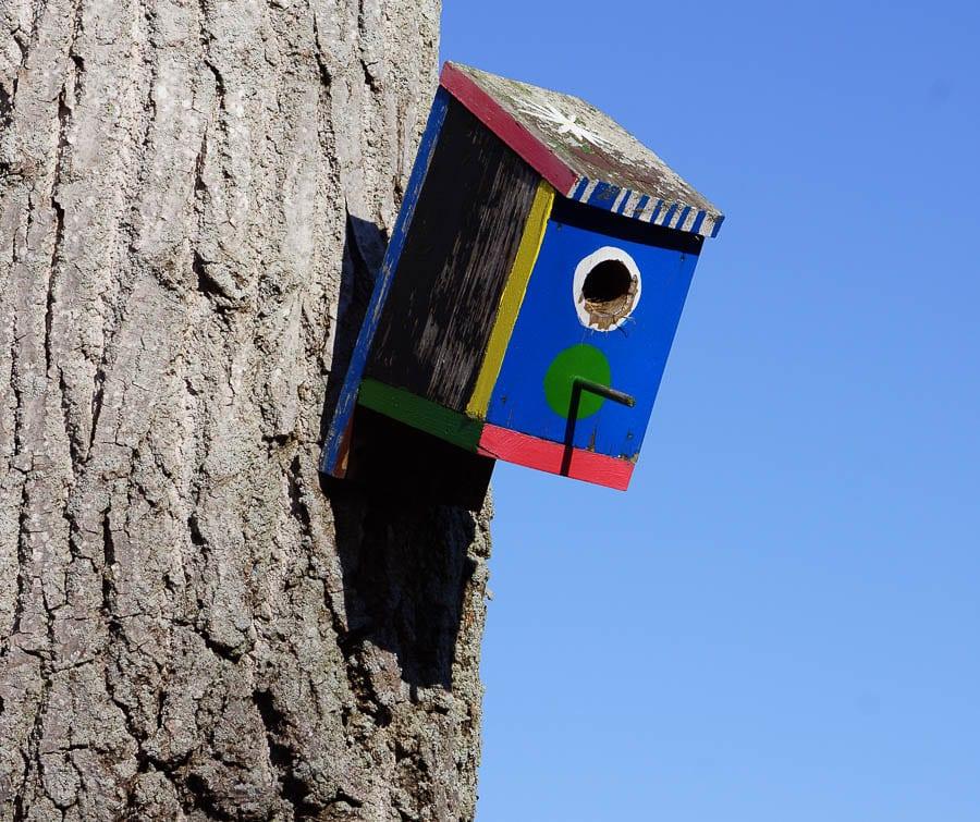 Painted bird box on tree