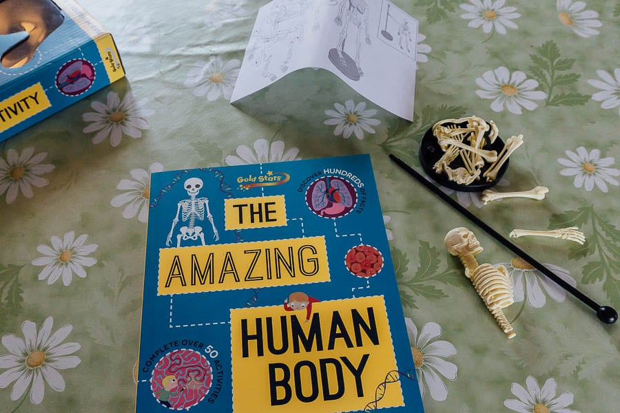 The Amazing Human Body book box and skeleton