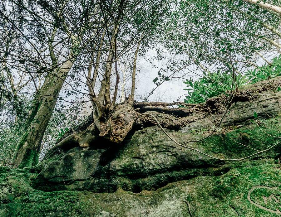 Wakehurst Rock Walk trees and sandstone