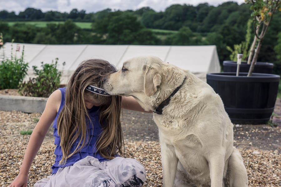Bluebell vineyard labrador kissing child