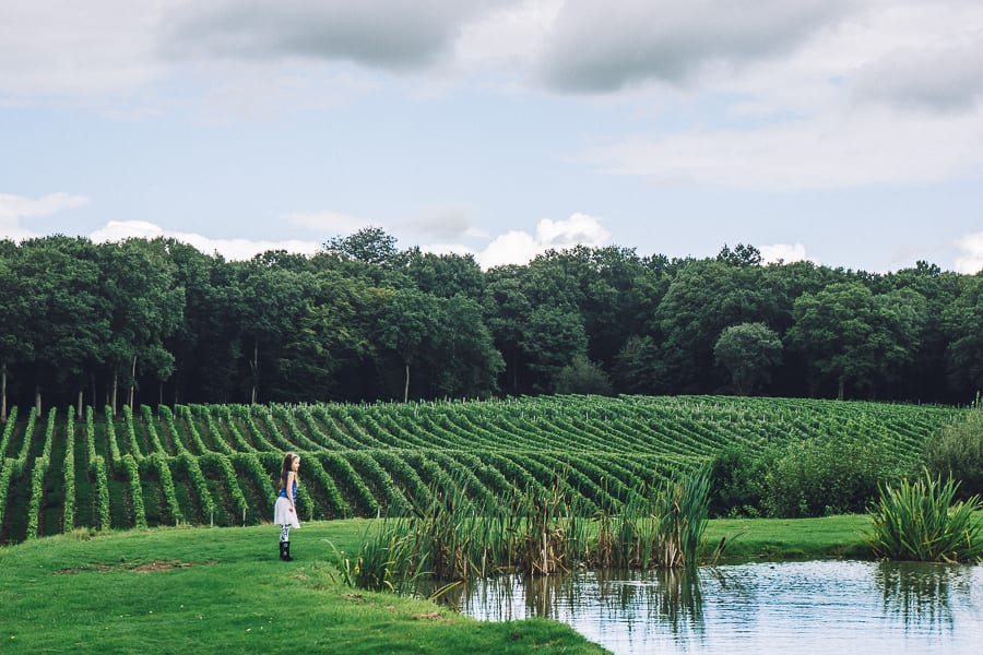 Bluebell vineyard pond and vines