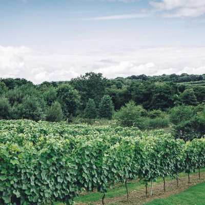 English Fizz from Bluebell Vineyard