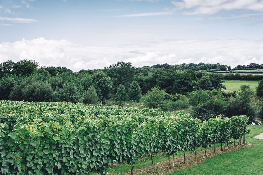 Bluebell vineyard sparkling wines Sussex