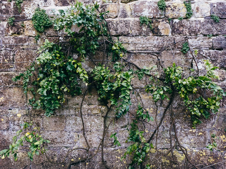 Wakehurst wall with plant trellis