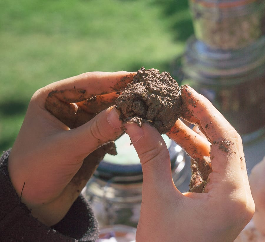 Make a seedbomb roll compost clay seeds