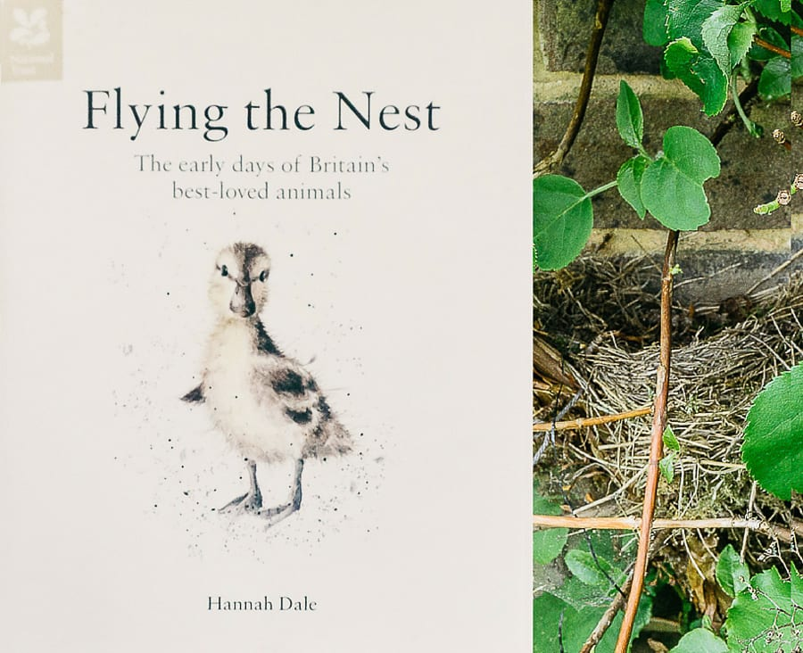 Flying the Nest Review Hannah Dale
