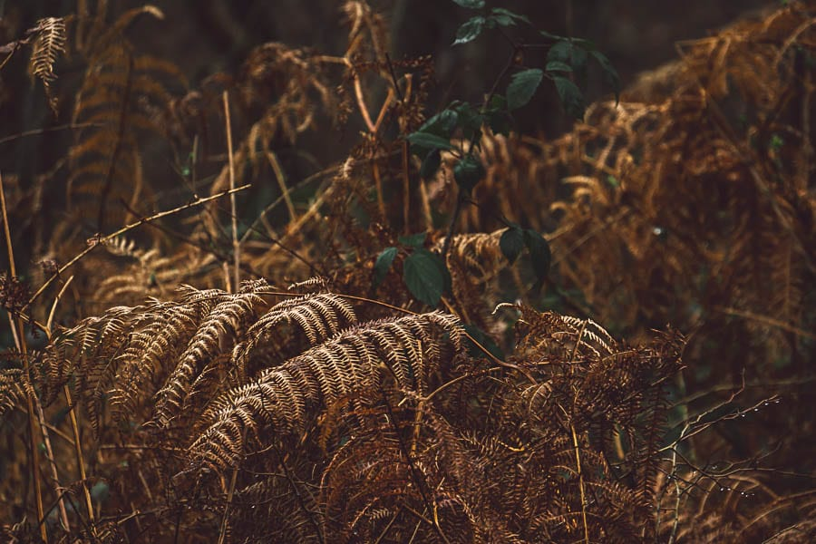Wild flower path copper fern