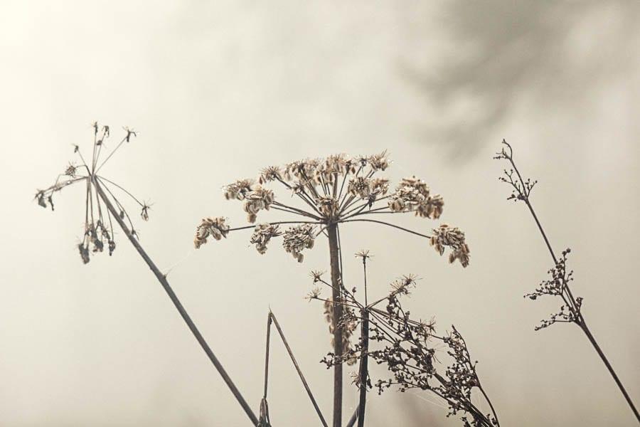 Wild flower path mist silhouettes