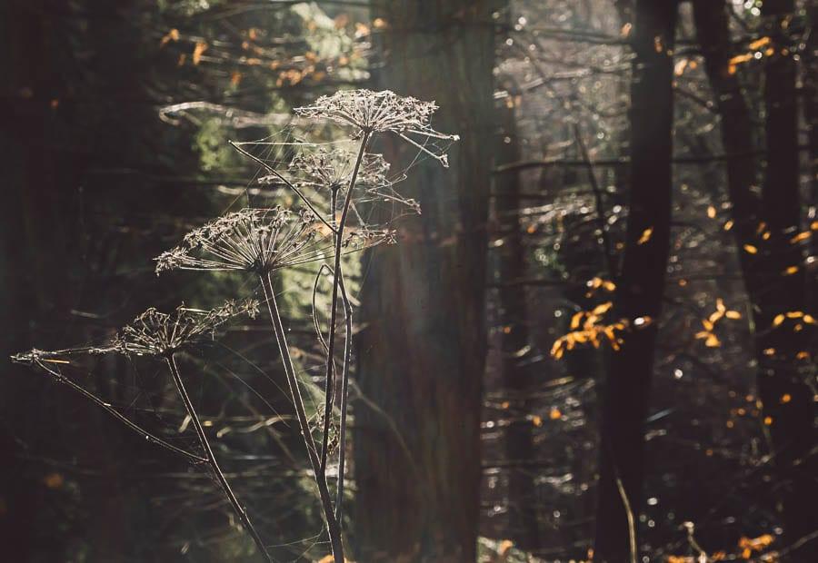 Woods wild flowers spider webs