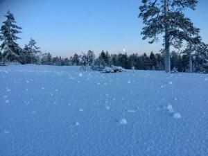 Natural snow balls!