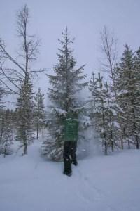 The snow shake