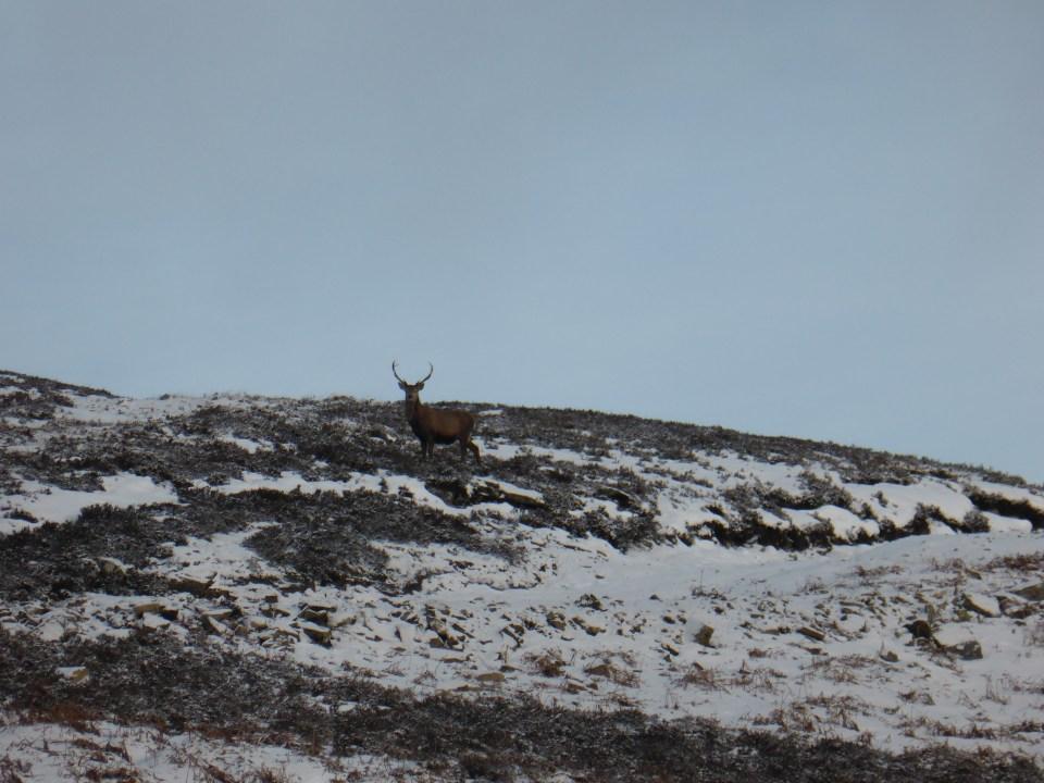 Red Deer on a wildlife walking tour