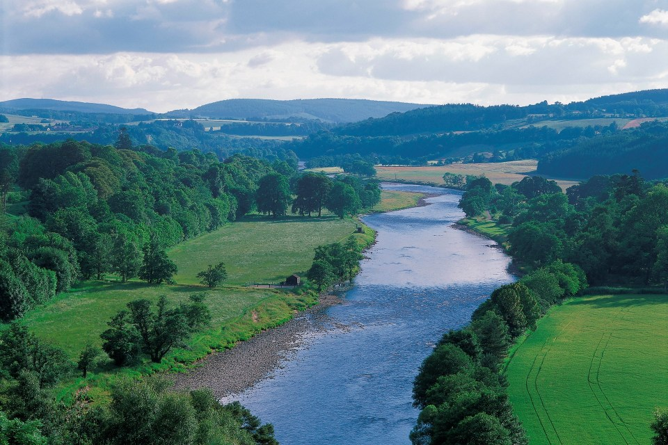 Wildlife walk by the river Spey