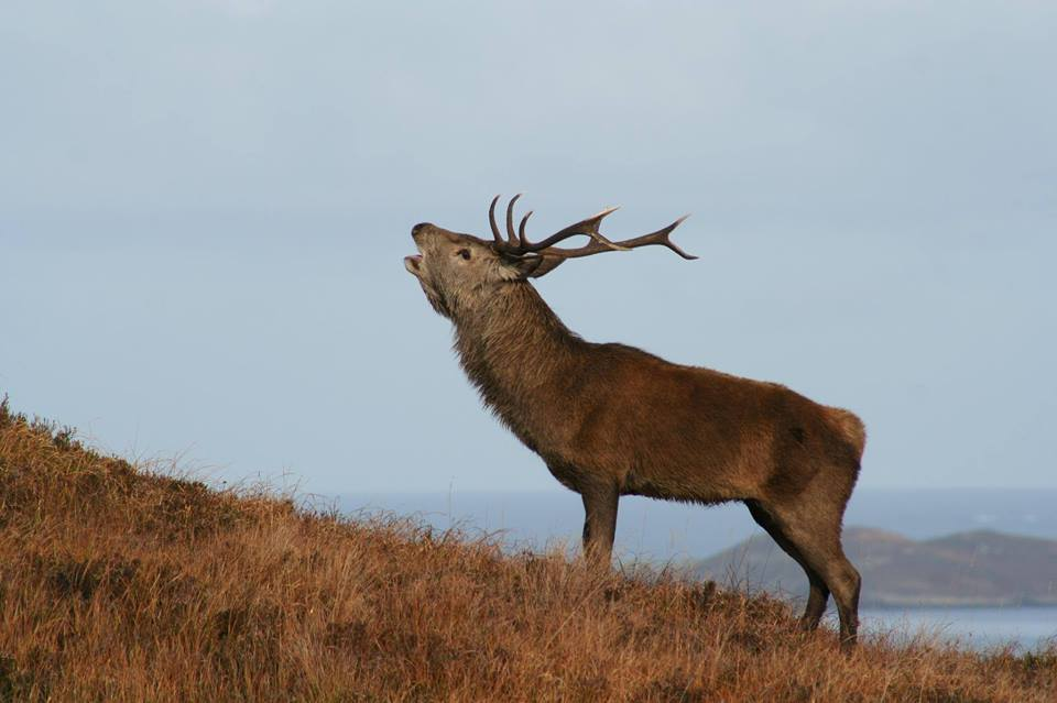 Red Deer Rut Tour Cairngorms National Park