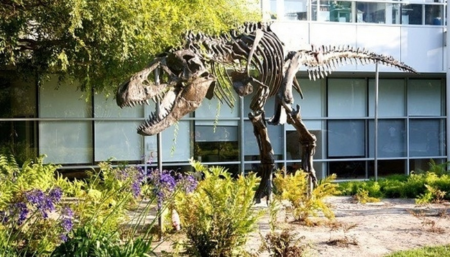"""They have a dinosaur! Yup! A dino's skeleton was found near their building in Mountain View, so Google has erected a giant t-rex skeleton and named it """"Stan"""" in its honor. A powerful name for a powerful hunter."""