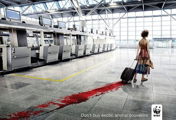Don't Buy Exotic Animal Souvenirs