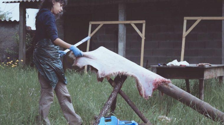 fleshing a sheepskin