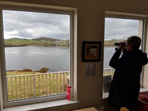 Spotting seals from Ravenspoint Cafe