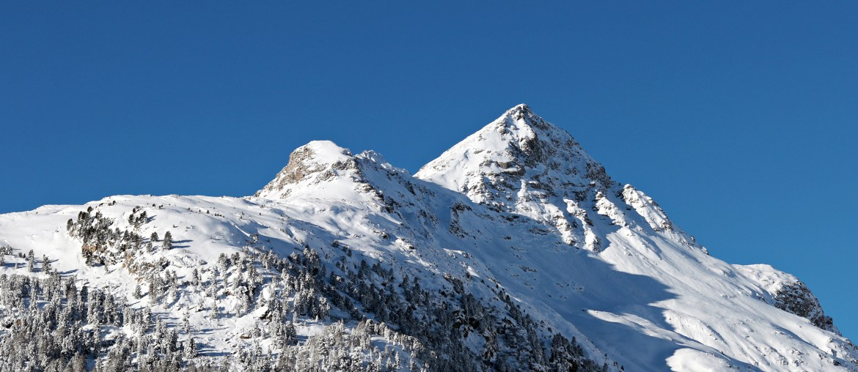 Hochgejagte Bestände in Graubünden