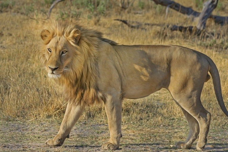 Jagd beschleunigt Wilderei