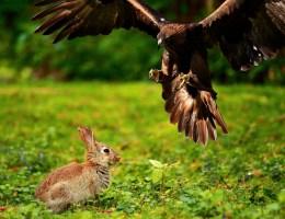 Gedanken zur Jagd