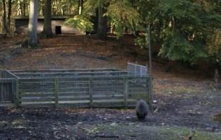 Wildschweingatter in Schleswig-Holstein