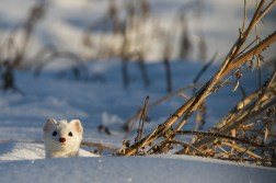 Pro Natura Tier des Jahres 2018 sbthegreenman