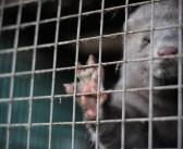 Bosnien und Herzegowina: Pelzfarmen trotz Verbot
