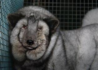 Pelzbranche ist nicht zu trauen