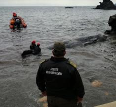 Spanien: Toter Pottwal mit 30 Kilo Plastik im Magen