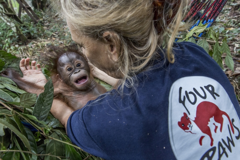 """Indonesia, Borneo, East Kalimantan 