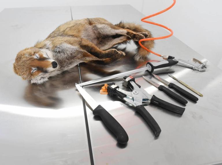 Wildtierfellen: Pelz-Etikettenschwindel auf Kosten der Wildtiere