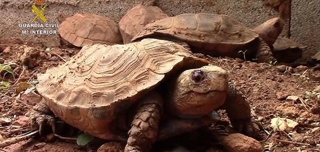 Illegaler Schildkrötenhandel auf Mallorca