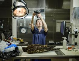 Forensik Wildtiere Foto: Washington Post