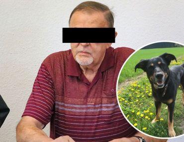 Hundemord Vogtland