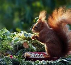 USA: Hobby-Jäger isst Eichhörnchenhirn und stirbt