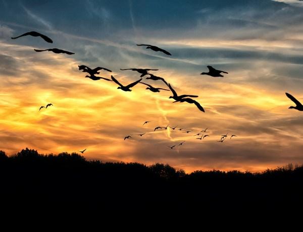 Zugvögel vor grossen Problemen