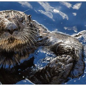 Grusskarte Otter