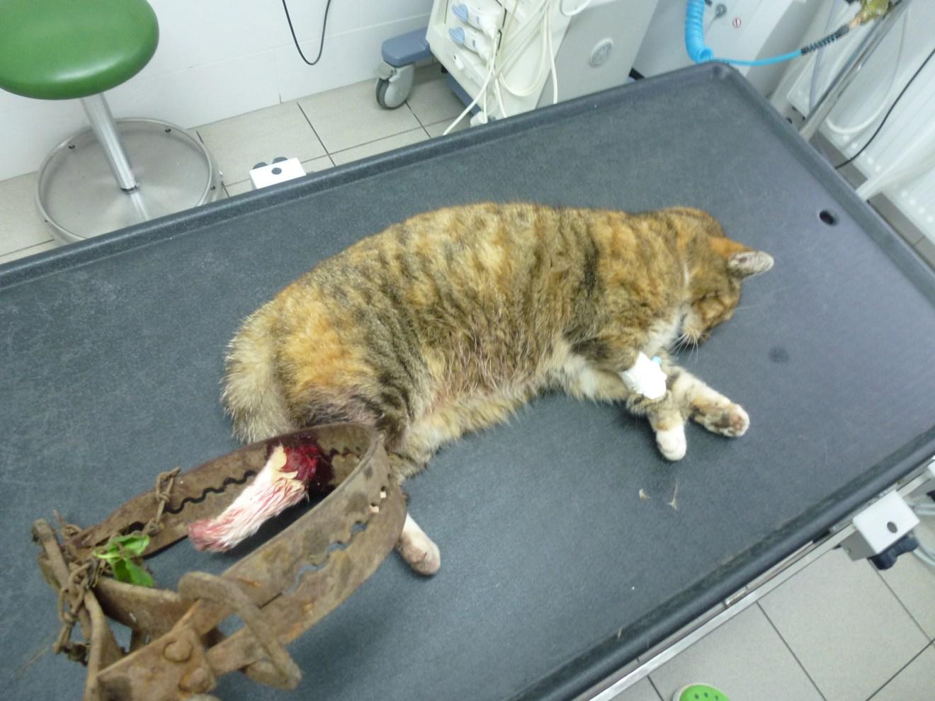 Tiere in Sachsen leiden enorm durch heimtückische Jagdmethode