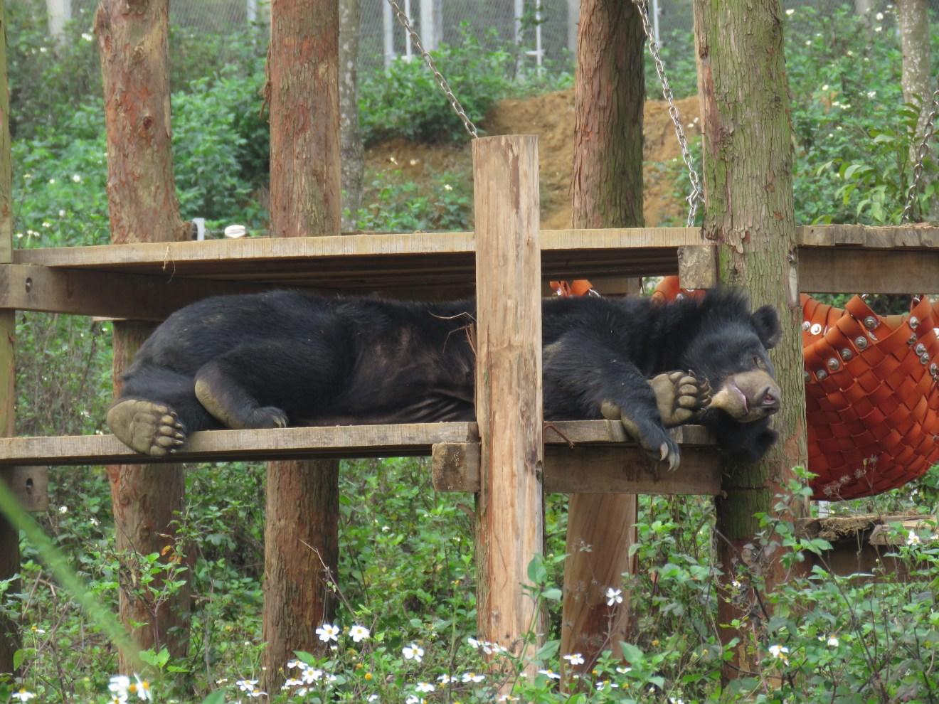 Vietnam: VIER PFOTEN eröffnet neues Bärenschutzzentrum