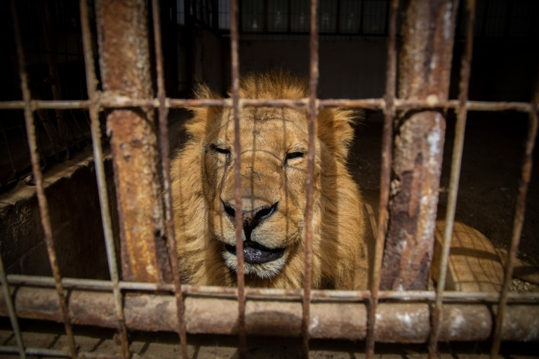 Rafah Zoo in Gaza 02 2019