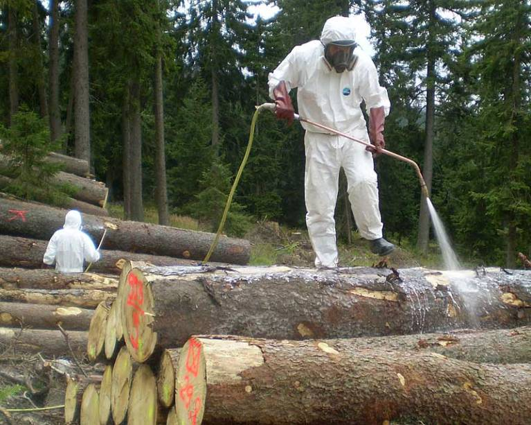 Giftkeule im Wald Foto: Archiv LWF