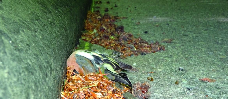 Fallen für Vögel
