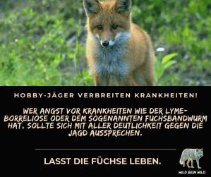 Wer Angst vor Krankheiten wie der Lyme-Borreliose oder dem sogenannten Fuchsbandwurm hat, sollte sich mit aller Deutlichkeit gegen die Jagd aussprechen.