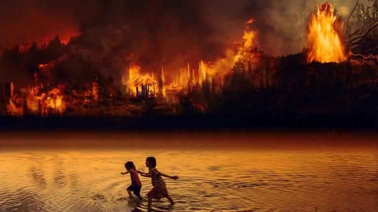 cropped-Amazonien-brennt-wegen-Fleischkonsum.jpg