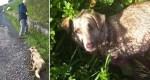 Tiermisshandlung: Hobby-Jäger quält Hund in Spanien