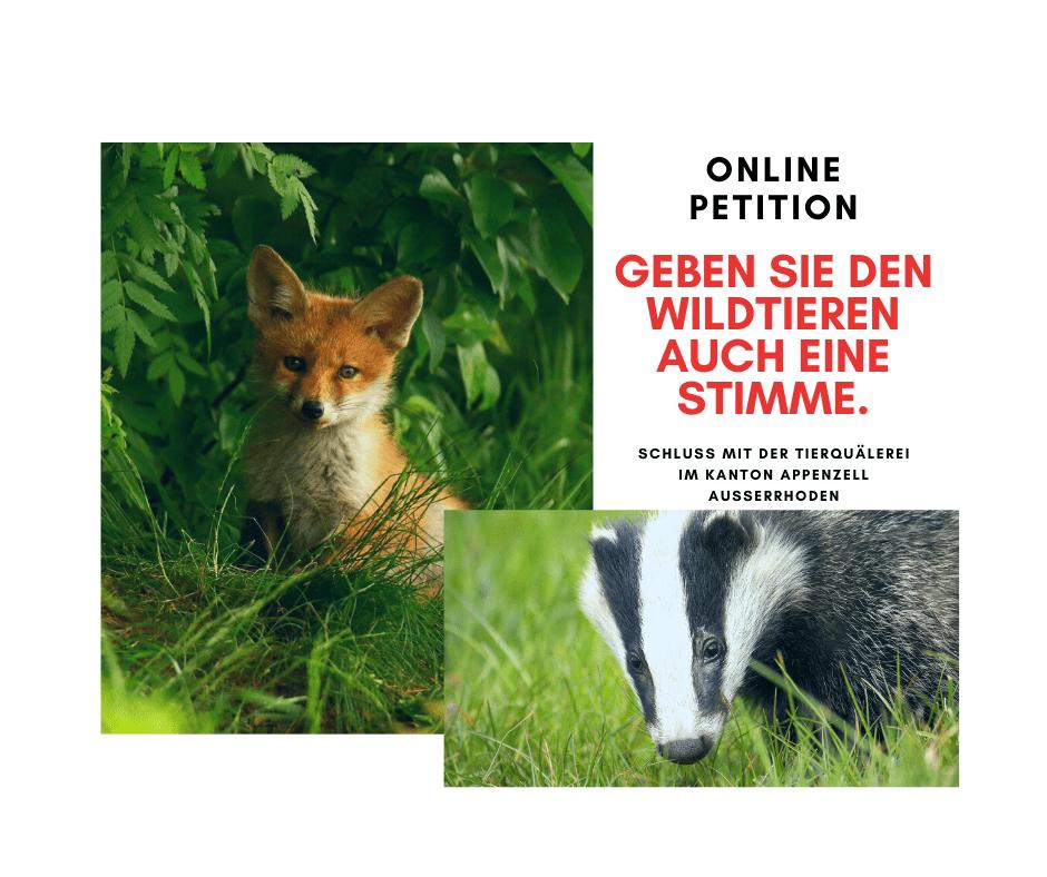 Stoppt das Fuchs- und Dachsmassaker im Kanton Appenzell Ausserrhoden