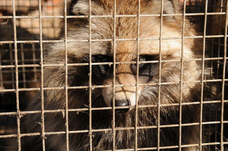 Arosa Dorf verbietet Werbung für Pelzprodukte
