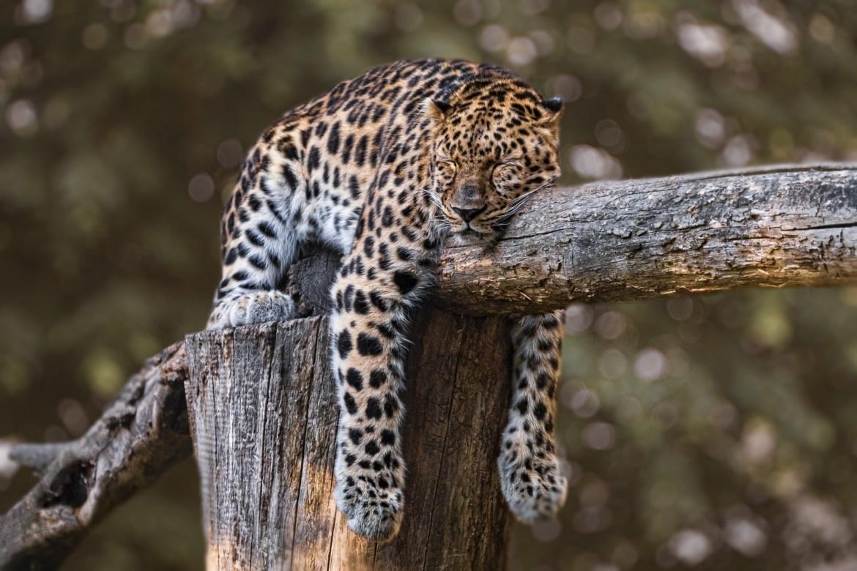 Indien Uno-Artenschutzkonferez