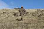 Jagdbestimmungen: Wegen Coronavirus temporäre Anpassung